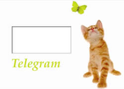 This playful kitten is sure to appeal to everyone, and is a perfect congratulations card for many different occasions.