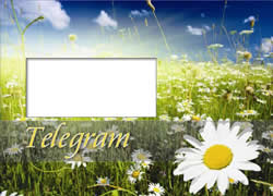 This lovely image of a meadow full of daisies would be perfect for a summer birthday congratulation message.